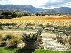 South Island Wine Tasting - love to go anytime again!