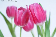 Hey, I found this really awesome Etsy listing at https://www.etsy.com/il-en/listing/227091496/tulip-love-pink-tulips-color-photograph