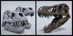 TYRANNOSAUR SKULL MUSEUM QUALITY, JULIEN ROMEO on ArtStation at http://www.artstation.com/artwork/tyrannosaur-skull-museum-quality