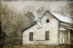 The Year He Waited by Cheryl Tarrant, via Flickr