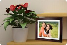 Digital Picture Frame Roundup | BH inDepth