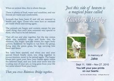 In Memory of our wonderful dog Jake, the inspiration for Personalized rainbow bridge poems… Rainbow Bridge Poem, Sympathy Gifts, Pet Loss, Over The Rainbow, Puppy Love, Poems, Cairn Terriers, Inspirational Quotes, Memories