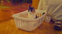 PAF-und-I: Der Wäschekorb
