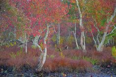 Scene from Mullica River by Jim Cook