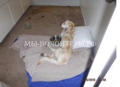 """Хозяйка приюта и """"зоозащитница"""" арестована за жестокое обращение с животными - http://xn----dtbjxcjfbus6gj.xn--p1ai/dogs/%d1%85%d0%be%d0%b7%d1%8f%d0%b9%d0%ba%d0%b0-%d0%bf%d1%80%d0%b8%d1%8e%d1%82%d0%b0%d1%89%d0%b8%d1%82%d0%bd%d0%b8%d1%86%d0%b0-%d0%b0%d1%80%d0%b5%d1%81%d1%82%d0%be/"""