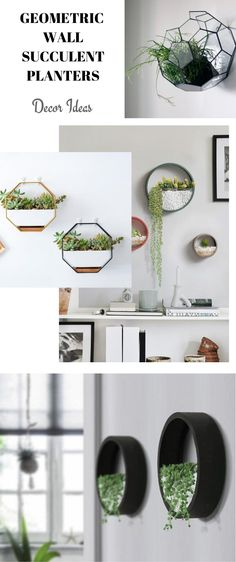 Succulents are thickened plants, usually retaining water for a longer period of time what makes it perfect for surviving all kinds of climate conditions.  #succulentplanter #wallsucculentplanterdecor #wallsucculentplantergeometric #succulentplanter