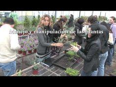 Video sobre los cursos de JArdines verticales http://www.paisajismourbano.com/videoteca.html