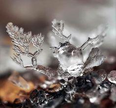 Le photographe russeAndrew Osokin réalise de superbes photographies macro de flocons de neige très détaillées qui nous permet d'admirer la fragile complex