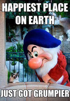 Grumpy Cat on his Disney World Vacation