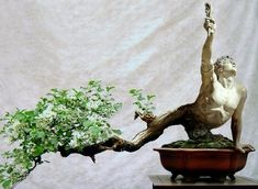 The Nature of Things: Bonsai and Espalier Indoor Bonsai, Bonsai Plants, Bonsai Garden, Bonsai Ficus, Bonsai Soil, Jade Bonsai, Bonsai Tree Care, Bonsai Styles, Pot Plante