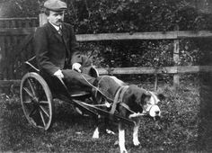 Jacob Brouwer, een bewoner van Ameland, op een hondenkar. Afbeelding dateert vermoedelijk van 1925.