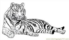tiger woods coloring pages - realistic sea life coloring pages google search