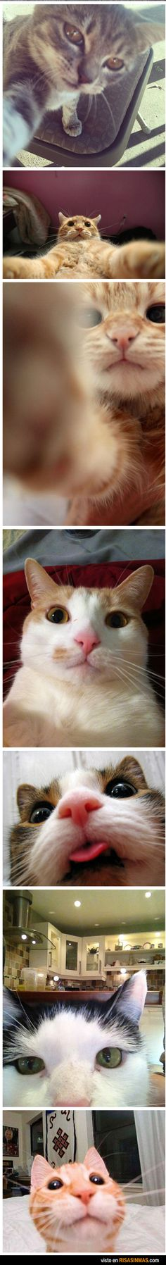 Cat selfies   ...........click here to find out more     http://googydog.com