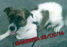 ZINASCO (PAVIA): SMARRITA DEA, CANE METICCIO BIANCO E MARRONE http://terzobinario.blogspot.it/2014/09/zinasco-pavia-smarrita-dea-cane.html