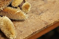 Tools of the trade - teasels for the most luxurious finish | Joshua Ellis & Co Ltd