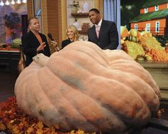 The world's largest pumpkin weighed in at 1,872 pounds.
