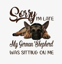 The German Shepherd German Shepherd Dogs, German Shepherds, Dog Furniture, Dog Clothes Patterns, Crafts With Pictures, Pet Clothes, Dog Clothing, Pet Grooming, Dog Coats