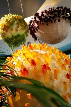 Penguin Pools, Exhibitions, Penguins, Singapore, Events, Decorations, Dessert, Fish, News