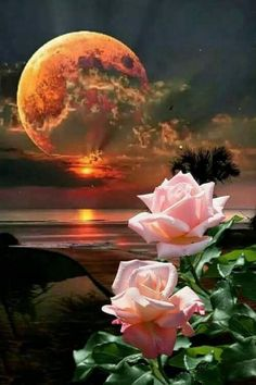 Beautiful Moon and Roses 🌹 Moon Pictures, Nature Pictures, Pretty Pictures, Beautiful Rose Flowers, Beautiful Moon, Beautiful Gifts, Beautiful Nature Wallpaper, Beautiful Landscapes, Moon Photography