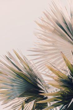 New York Discover Palm Tree Art Tropical Print Botanical Art Print Capacity Fine Art Photo California Florida Ar Palm Tree Art, Palm Trees, Tree Tree, Fine Art Photo, Photo Art, Art Floral, Jolie Photo, Botanical Art, Aesthetic Wallpapers