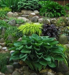 Így legyen a kerted árnyékos része is buja és virágzó Plants, Lawn And Garden, Plant, Planets