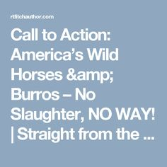 Call to Action: America's Wild Horses & Burros – No Slaughter, NO WAY!   Straight from the Horse's Heart