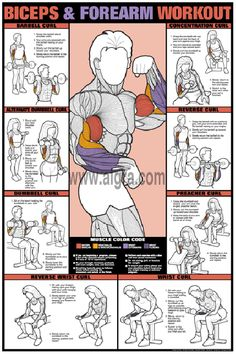 Biceps & Forearm Workout Poster