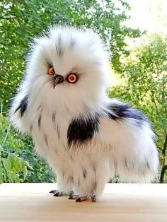 10 Beautiful and Colorful Birds - Animals - Animal pictures Baby Owls, Cute Baby Animals, Animals And Pets, Funny Animals, Baby Penguins, Cute Birds, Pretty Birds, Exotic Birds, Colorful Birds