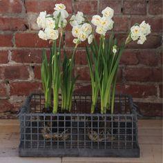 AFH FOUND: Vintage Iron Tulip Crate