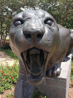 Go University of Houston Cougars