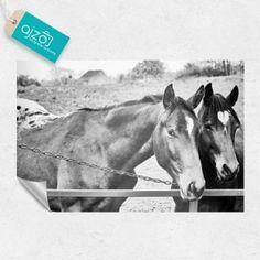 Fototapeta czarno-białe konie. #fototapeta #konie #bnw #black #white #czarnobiała #konie #love