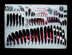 Juvenile male Wallcreeper feathers Photograph by Robert Clark - Miracle of Miracles | Audubon Magazine