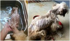 Justice For Sam! Dumped At a Virginia Rescue In a Severe State Of Neglect! | PetitionHub.org