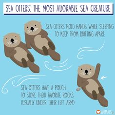 AHHH my favorite animal (the sea otter) since I was like AHHH mein Lieblingstier (der Seeotter) seit ich 4 bin! Otters Cute, Baby Otters, Otters Funny, Baby Sloth, Cute Baby Animals, Animals And Pets, Funny Animals, Wild Animals, Animal Pictures