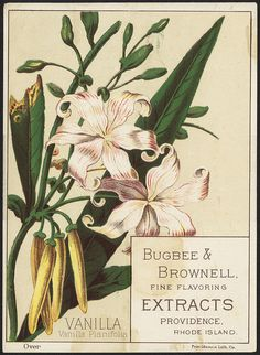 Vanilla, Vanilla Planifolia - Bugbee & Brownell, fine flavoring extracts, Providence, Rhode Island [front] by Boston Public Library on Flickr.  Vanilla
