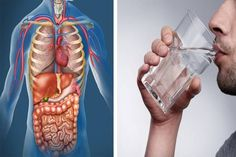 Water is important to every part of our body. Our body is made up of water, so it needs to be replenished daily in order to function properly. What Happened To You, What Happens When You, Drinking Only Water, Healthy Holistic Living, Healthy Living, Water Benefits, Drink More Water, Health Matters, Protein Shakes