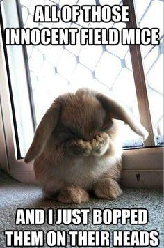 Little Bunny Foo Foo! Hahaha too funy