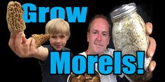 How to Grow Morels at Home:  We did it