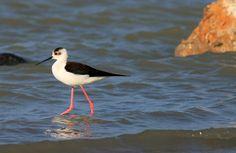 #Wildlife in Greece Kos, Flamingo, Greece, Salt, Wildlife, Birds, Island, Nature, Photography