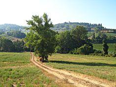 Castelfiorentino Photo | Tuscany Landscapes - Tuscany Pictures & Photos