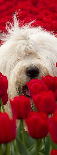 Spring Time - SWEET PUPPY