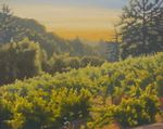 """""""Sunshine on the Vine"""" by John White. 24""""x30"""" oil on canvas painting of the sun coming up over the vineyards in Los Gatos, CA. This is the studio version of what the artist painted one day during the Los Gatos Plein Air Competition."""