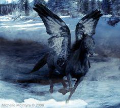 images of pegasus | Snow Pegasus by TotalEclipseStudios