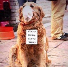 Again The Brave Dog #occupygezi #direngeziparkı #direngezi #wearegezi #occupytaksim #occupyturkey #chapulling #Istanbul #Turkey