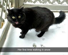 Apparently, kitty does not particularly care for the cold, wet snow...