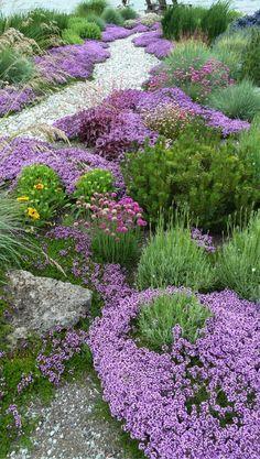 blue oat grass,ceanothus,Galliardia,Heliotrichon sempervirens,Iris Siberica,Miscanthus gracillimus,Thymus Serpyllum...de tijm en andere droogteresitente planten hebben omzeggens altijd een kruidig perfum bij aanraking of bij ochtendmist