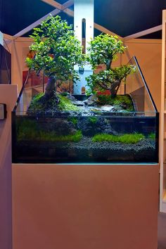 Paludarium with real bonsai trees!