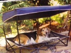 Dog Bed Canopy Sun Shade Medium 60 lbs Umbrella Folding Pet Cot Portable   eBay