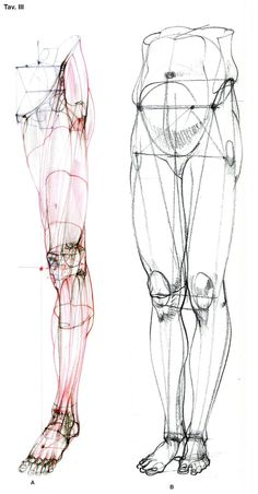 Exceptional Drawing The Human Figure Ideas. Staggering Drawing The Human Figure Ideas. Leg Anatomy, Anatomy Poses, Anatomy Study, Drawing Legs, Life Drawing, Drawing Proportions, Drawing Faces, Art Drawings, Figure Drawing Reference