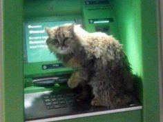 [:en]Cutest Cat Ever![:] - cats #catlover #cat #kitty #kitten #猫